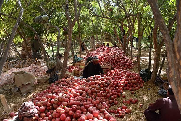 Afghan Fresh Fruits