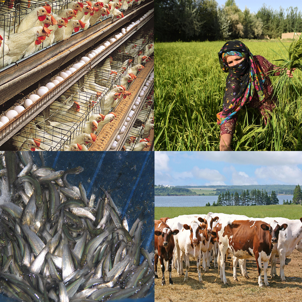 AGRICULTURE, LIVESTOCK AND POULTRY SERVICES